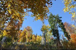 Forêt Grésivaudan